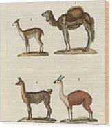 Various Camels Wood Print