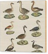 Various Kinds Of Geese Wood Print