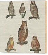 Various Kinds Of Owls Wood Print