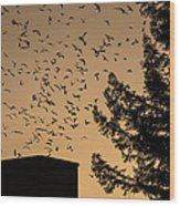 Vaux's Swifts In Migration Wood Print by Garry Gay