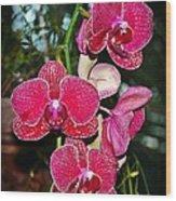 Velvet Petals Wood Print by Liudmila Di