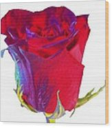 Velvet Rose Bud 2 Wood Print