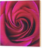 Velvet Rose Wood Print by Kathy Yates