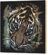 Velvet Tiger Cub Wood Print