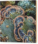 Velvet Wild Mushrooms  Wood Print
