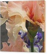 Velvety Soft Vanilla And Pink Iris Wood Print