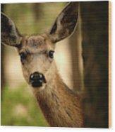 Venado Bura- Small Deer-bryce Canyon Wood Print