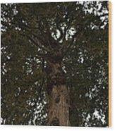 Venerable Elder Wood Print