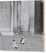 Cats Of Venice Wood Print