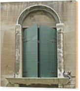 Venice Green Shutters With Birds Wood Print