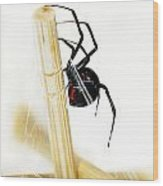 Venomous Black Widow Spider Wood Print