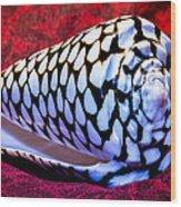 Venomous Conus Shell Wood Print