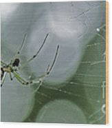 Venusta Orchard Spider Wood Print