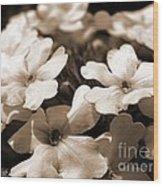 Verbena Named White Hail Wood Print