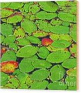 Verdant Swamp Wood Print
