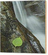 Vermont Aspen Leaf Waterfall Camels Hump Duxbury Wood Print