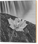 Vermont Autumn Maple Leaf Black And White Wood Print