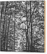 Vermont Forest Sunrise Ricker Pond Black And White Wood Print