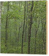 Vermont Mount Mansfield Green Forest Fog Panorama Wood Print