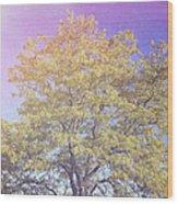 Vermont Tree Light Leak Sunflare  Wood Print
