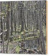 Vernal Pool 1 Wood Print