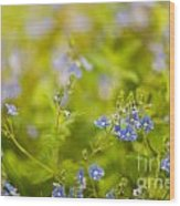 Veronica Chamaedrys Named Speedwell Or Gypsyweed Wood Print
