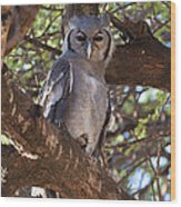 Verreauxs Eagle Owl In Tree Wood Print