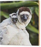 Verreauxs Sifaka With Baby Madagascar Wood Print