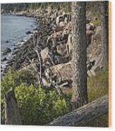 Vertical Photograph Of The Rocky Shore In Acadia National Park Wood Print