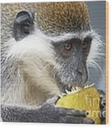 Vervet Monkey Eating An Orange Wood Print