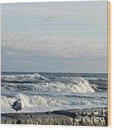 Seagull In Winter Wood Print