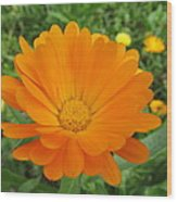 Very Lovely Orange Bloom Wood Print