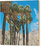Very Tall Fan Palms In Andreas Canyon In Indian Canyons-ca Wood Print