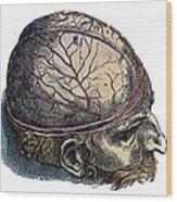 Vesalius: Cranium Wood Print