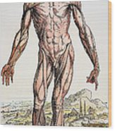 Vesalius: Muscles 01 Wood Print