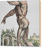 Vesalius: Muscles 02, 1543 Wood Print