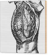 Vesalius: Thoracic Cavity Wood Print