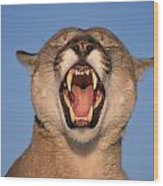 V.hurst Tk21663d, Mountain Lion Growling Wood Print