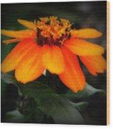 Vibrant Colored Zinnia Wood Print