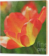 Vibrant Colorful Tulips Wood Print