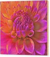 Vibrant Dahlia Flower Wood Print
