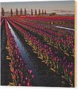 Vibrant Dusk Tulips Wood Print