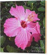 Vibrant Pink Hibiscus Wood Print