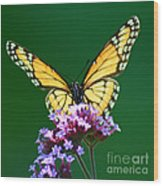 Viceroy Butterfly Square Wood Print