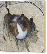 Vicious Animal Sleeping Wood Print