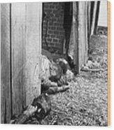 Victims Of The Gardelegen Massacre Wood Print
