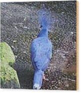 Victoria Crowned Pigeon Wood Print