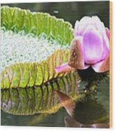 Victoria Lily Bloom 1 Wood Print