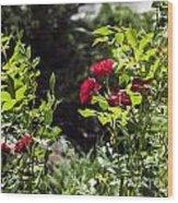 Victoria Park-5 Wood Print