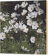 Victoria Park-6 Wood Print